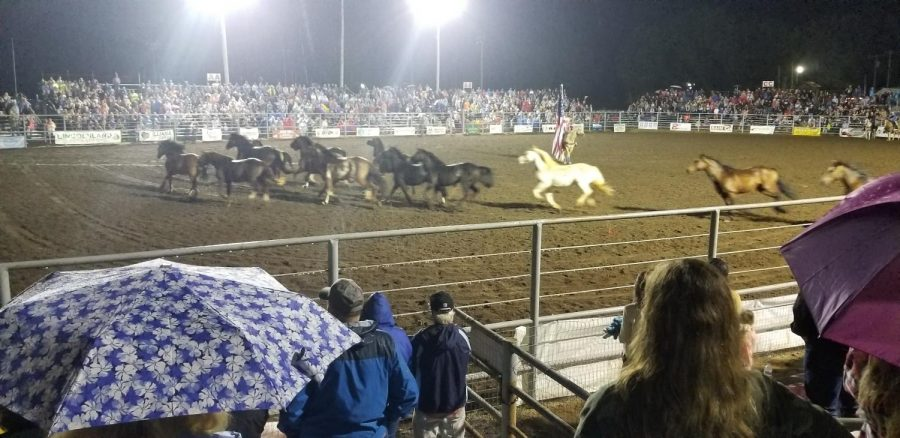 The Rodeo Is Back In Swing!
